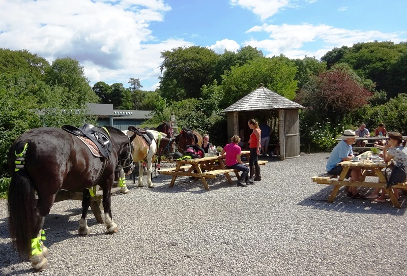 Horses at Wolf House Gallery Cafe Silverdale - photo Zoe Dawes